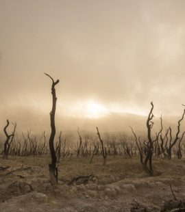 PNEVMATIKH_ZWH - dead-trees.jpg
